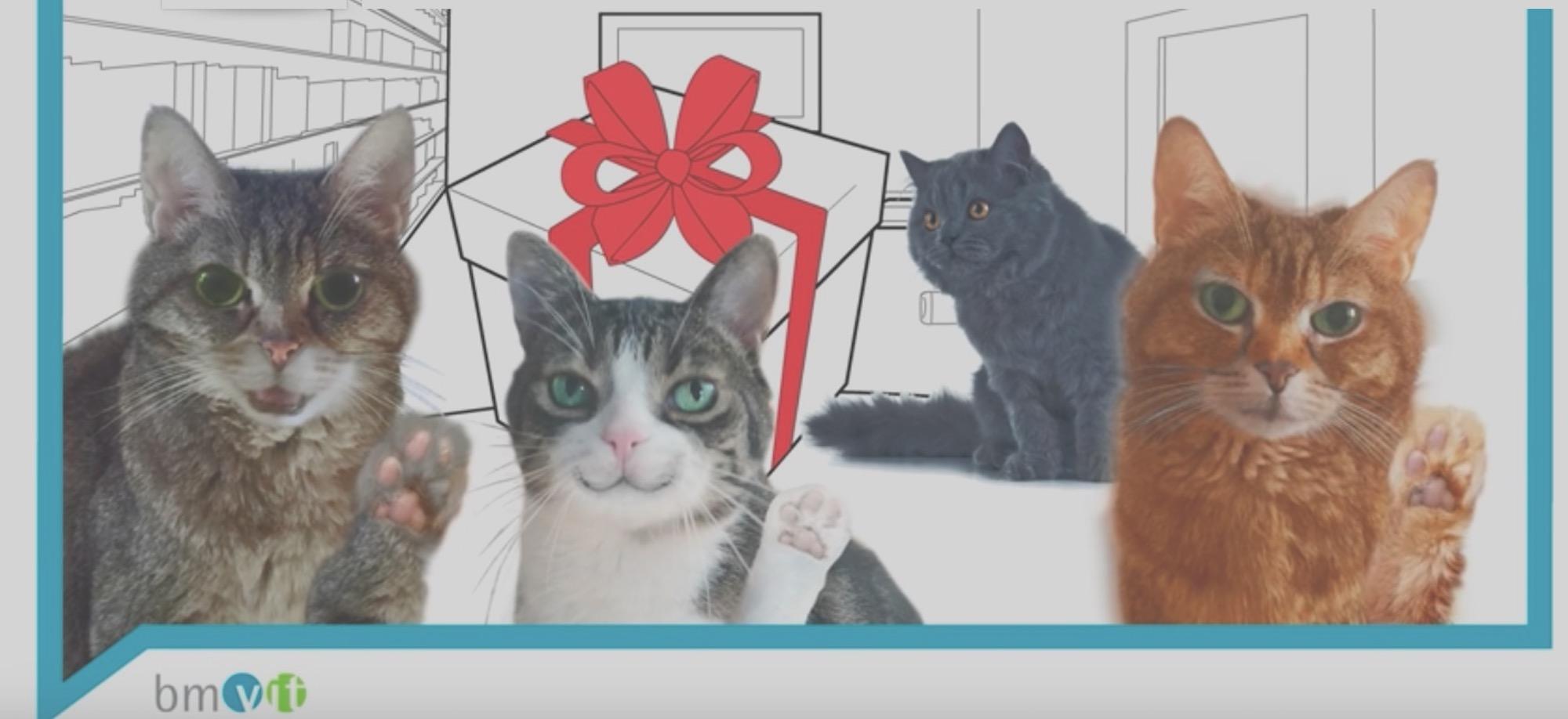 Katzenvideo Industrie 4.0